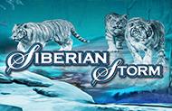 >Игровой автомат Siberian Storm